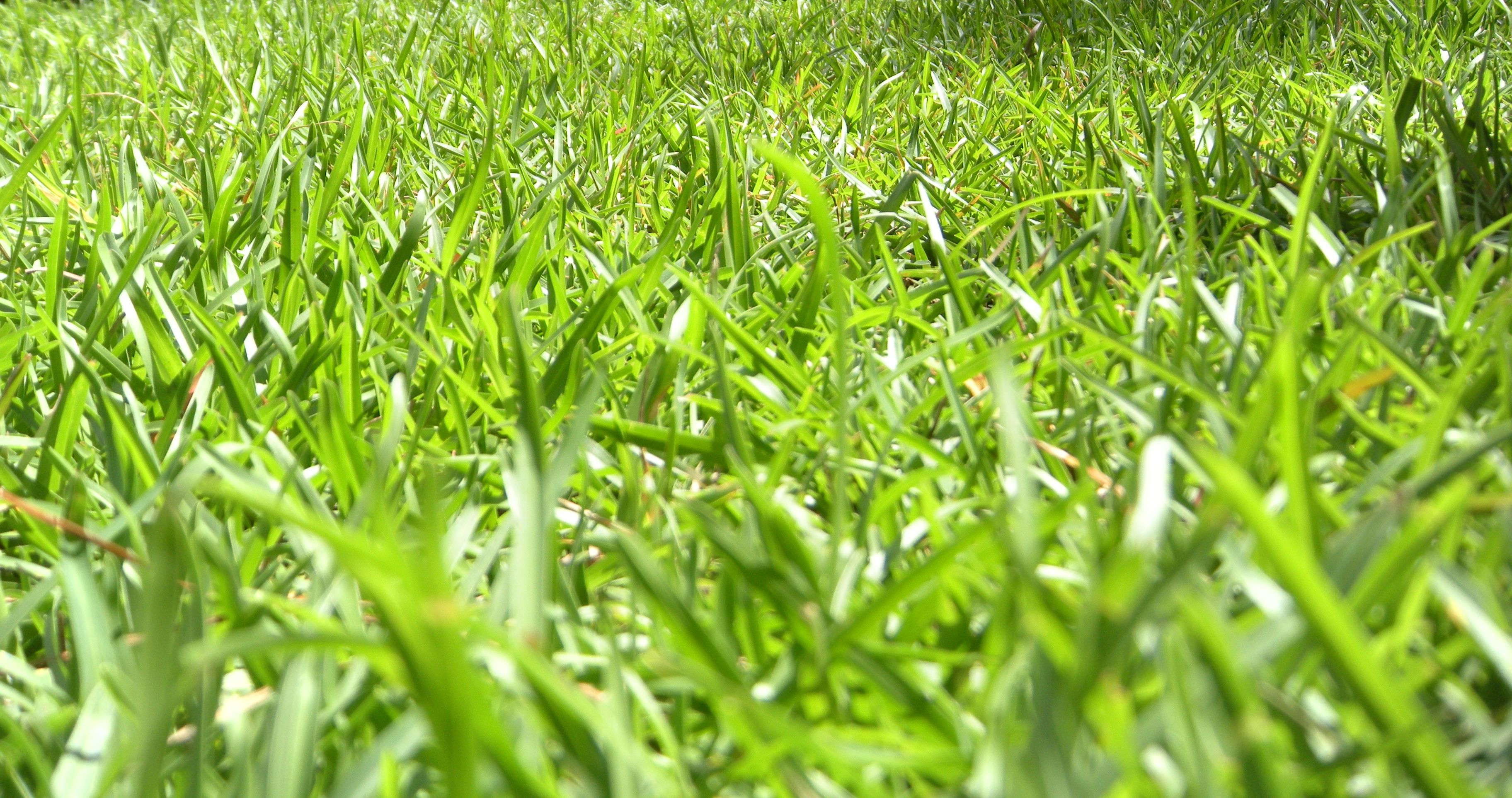 Lush and Green! Fertilizing, Dethatching and Aerating Available.